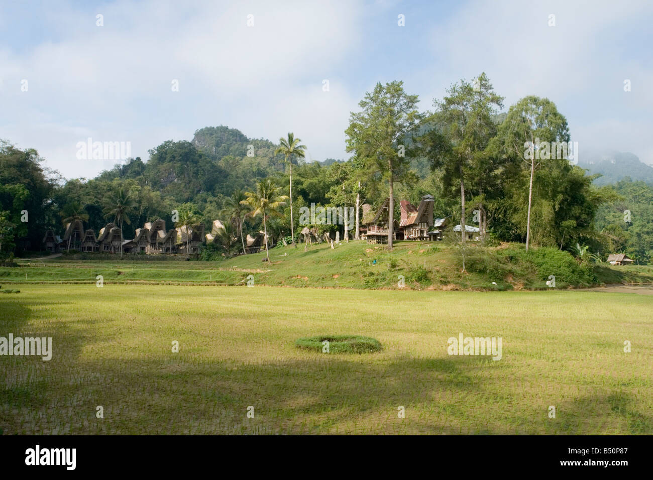 The village of Ke'te Kesu in the background of a paddy field (Sulawesi-Indonesia). Le village de Ke'te Kesu - Stock Image