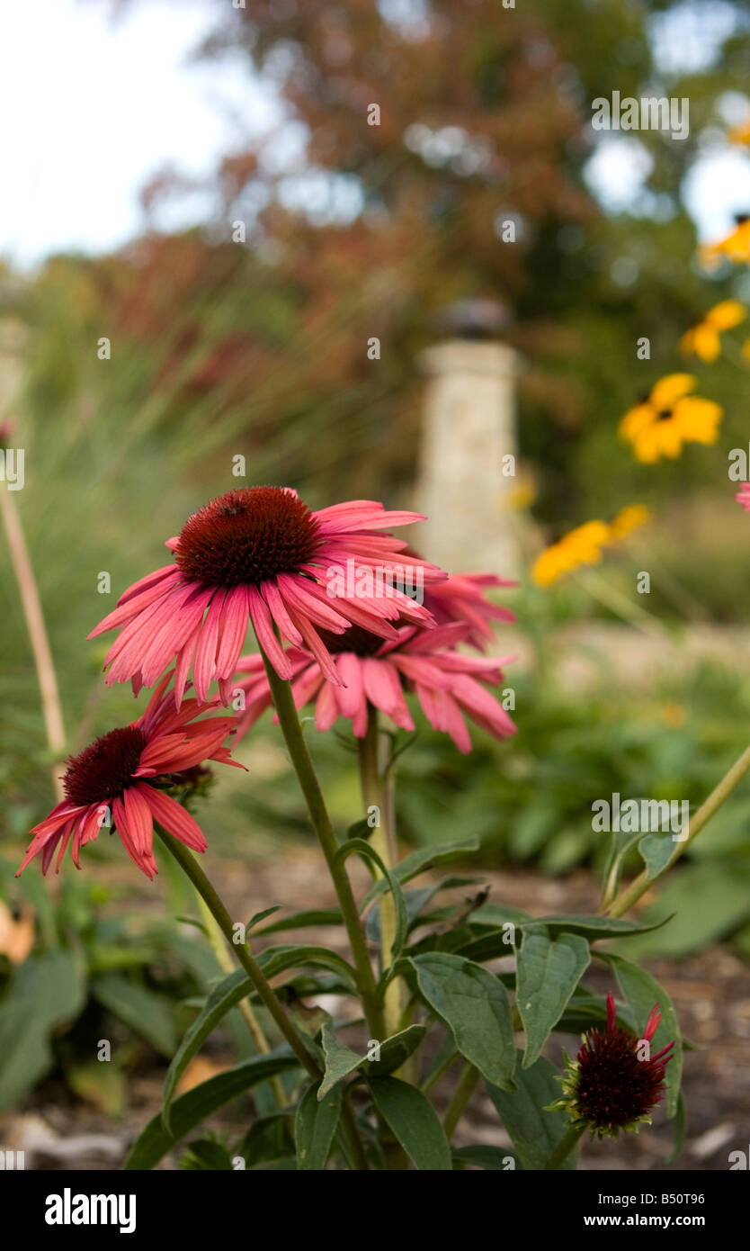 Flowers in a garden. - Stock Image