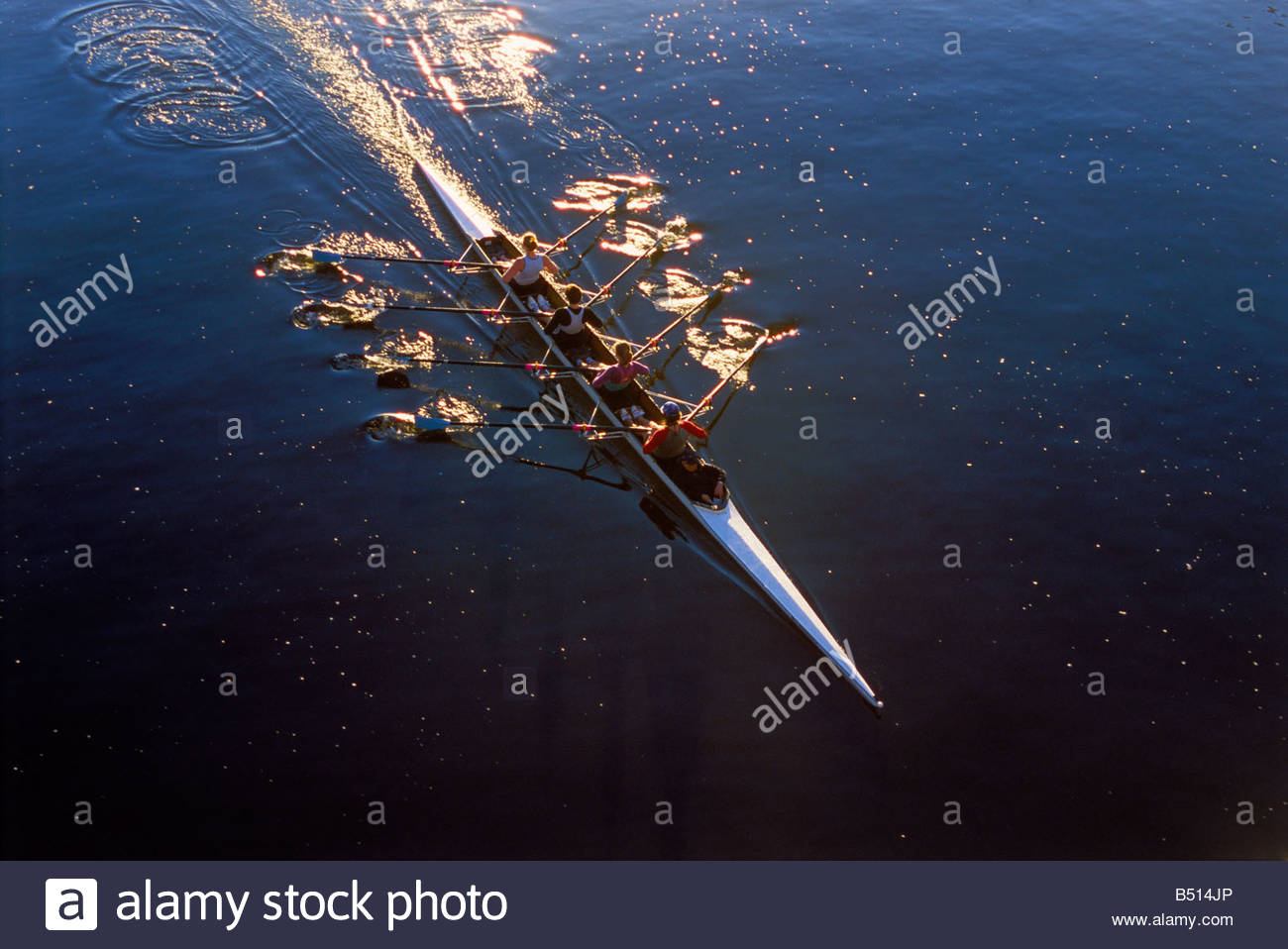 women in a coxed quadruple scull rowing boat on the Yarra River in Melbourne - Stock Image