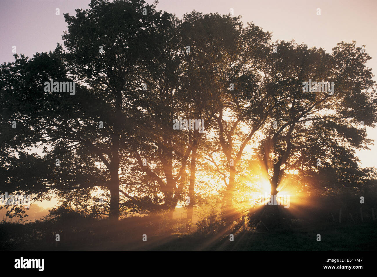 Sun in trees, Brecon Beacons, Wales, UK - Stock Image