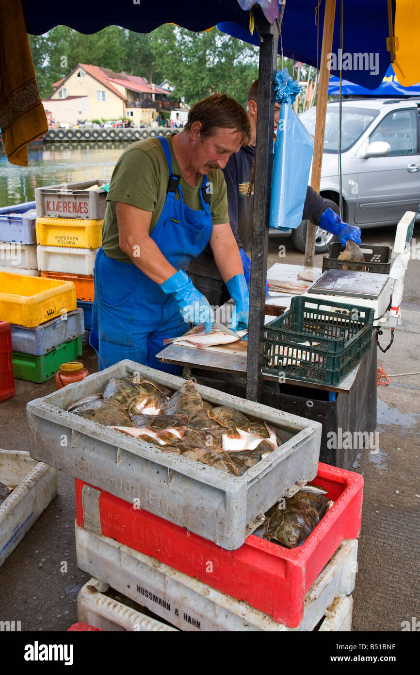 Fishermen preparing fish on dockside Leba Poland - Stock Image