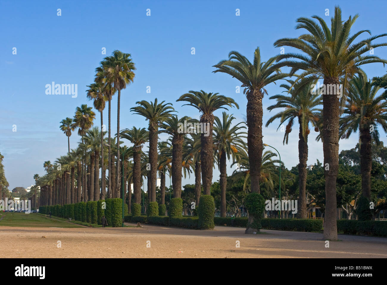 Palm alley in city park, Casablanca, Morocco - Stock Image