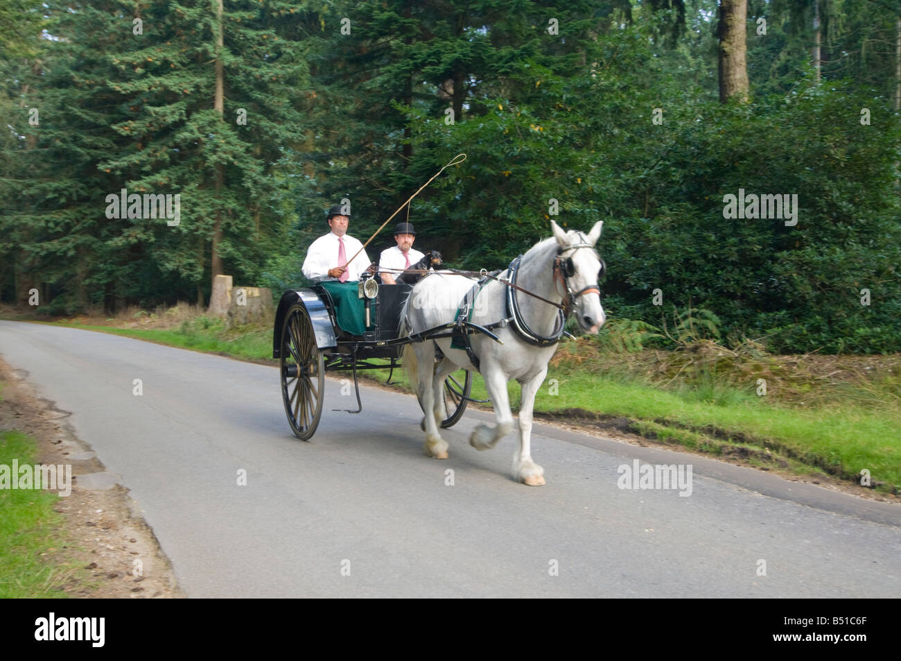 Horse cart Rhinefield Ornamental Drive New Forest ...