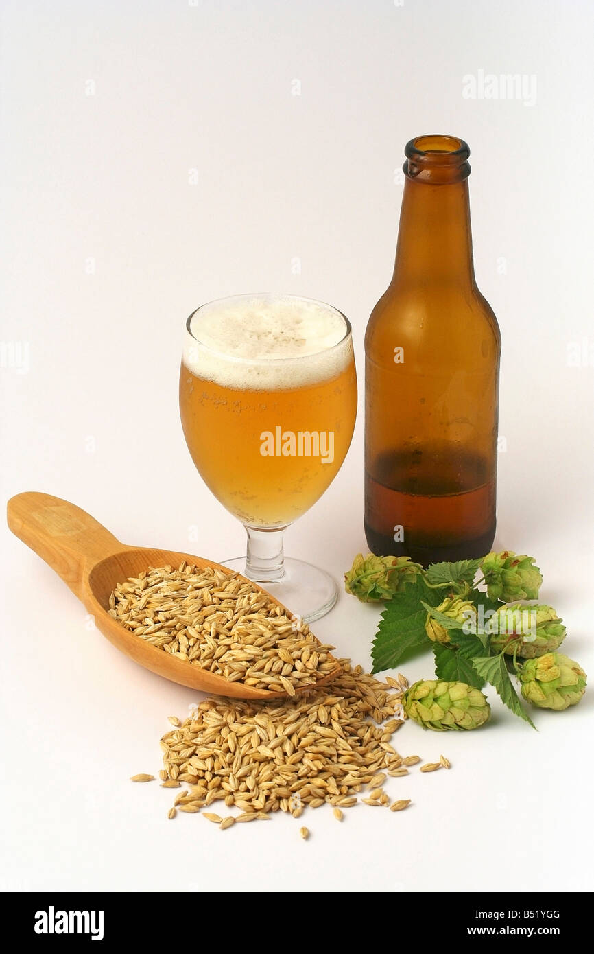 Beer, barley and brewer's hops - Stock Image