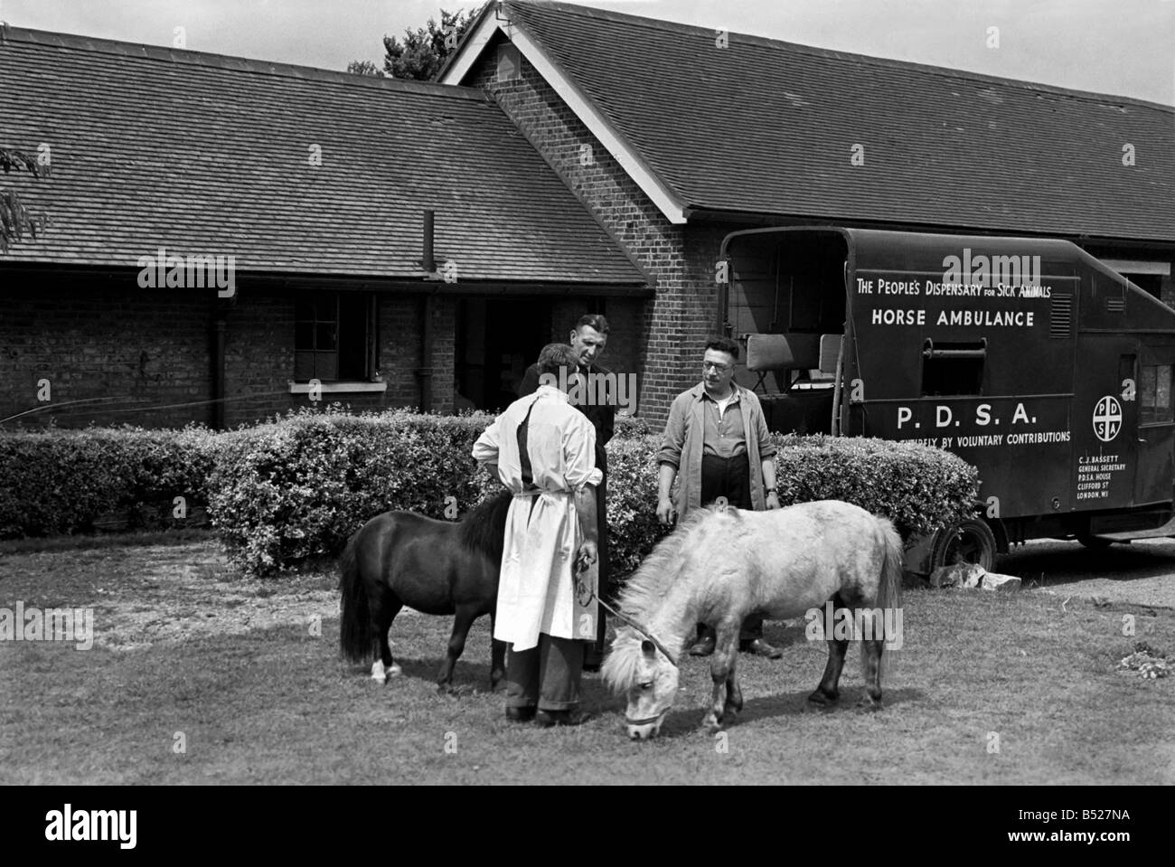 The People's dispensary for sick animals-PDSA Centre. July 1952 C3468-001 - Stock Image