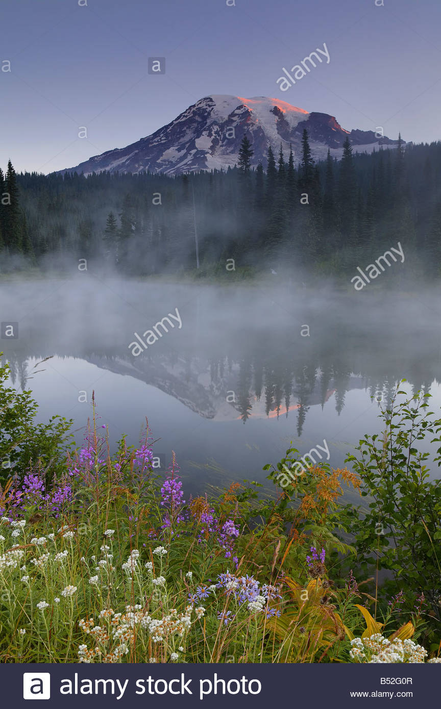 Steam rises over one of the Reflection Lakes, displaying a mirror image of Mount Rainier at sunrise. - Stock Image
