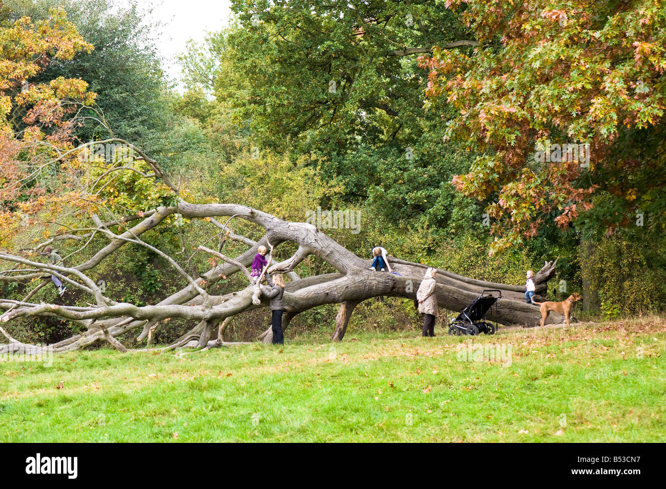 Autumn colours on Hampstead Heath NW3 London United Kingdom - Stock Image