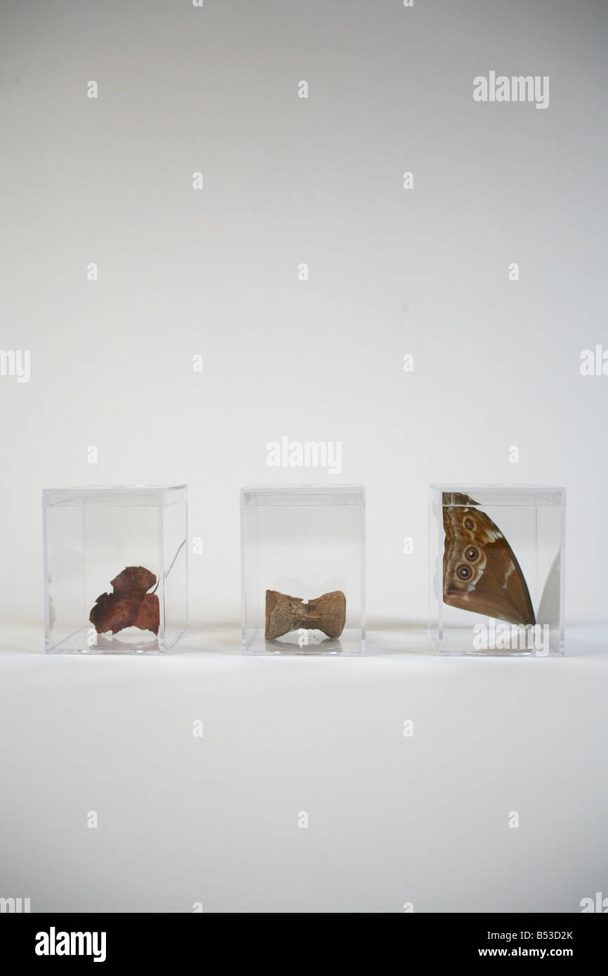 a fall leaf, a fossil bone, a butterfly wing - Stock Image