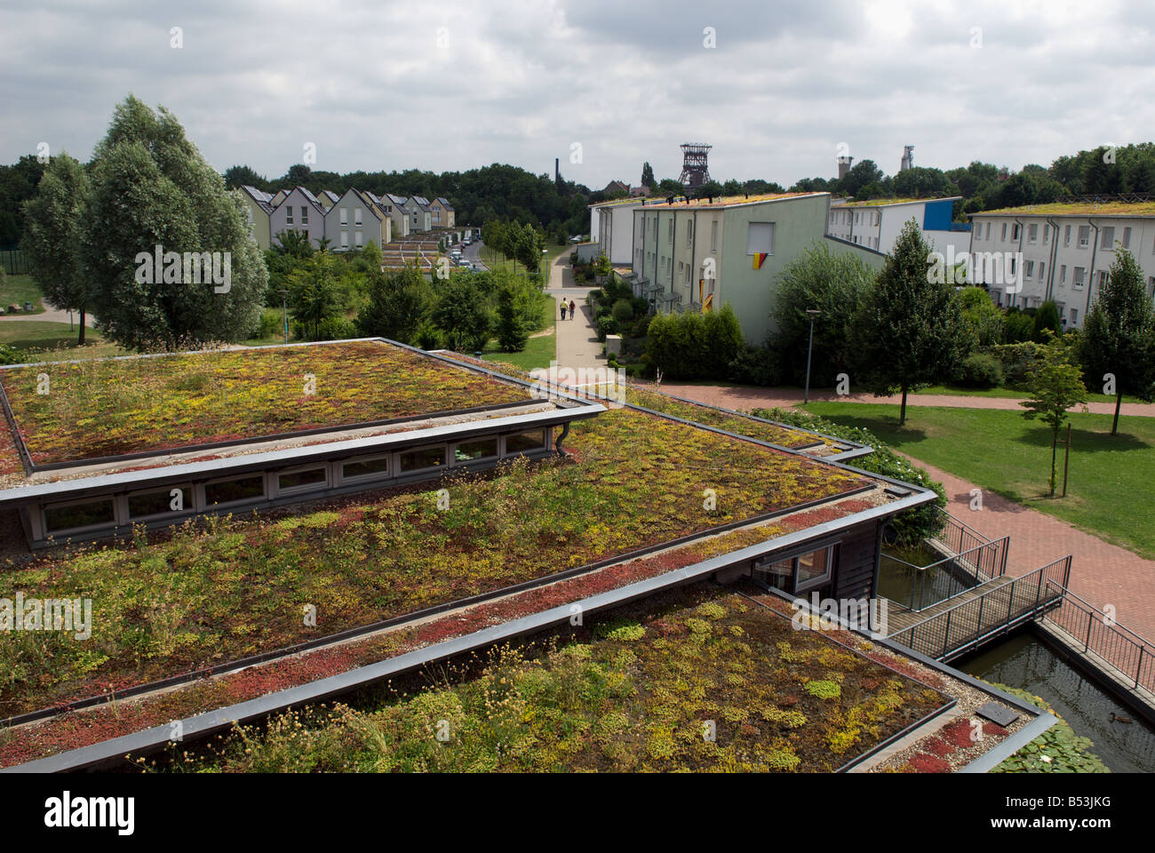 Sedum or 'living roof' on a school classroom in Gelsenkirchen, North Rhine-Westphalia, Germany. Stock Photo