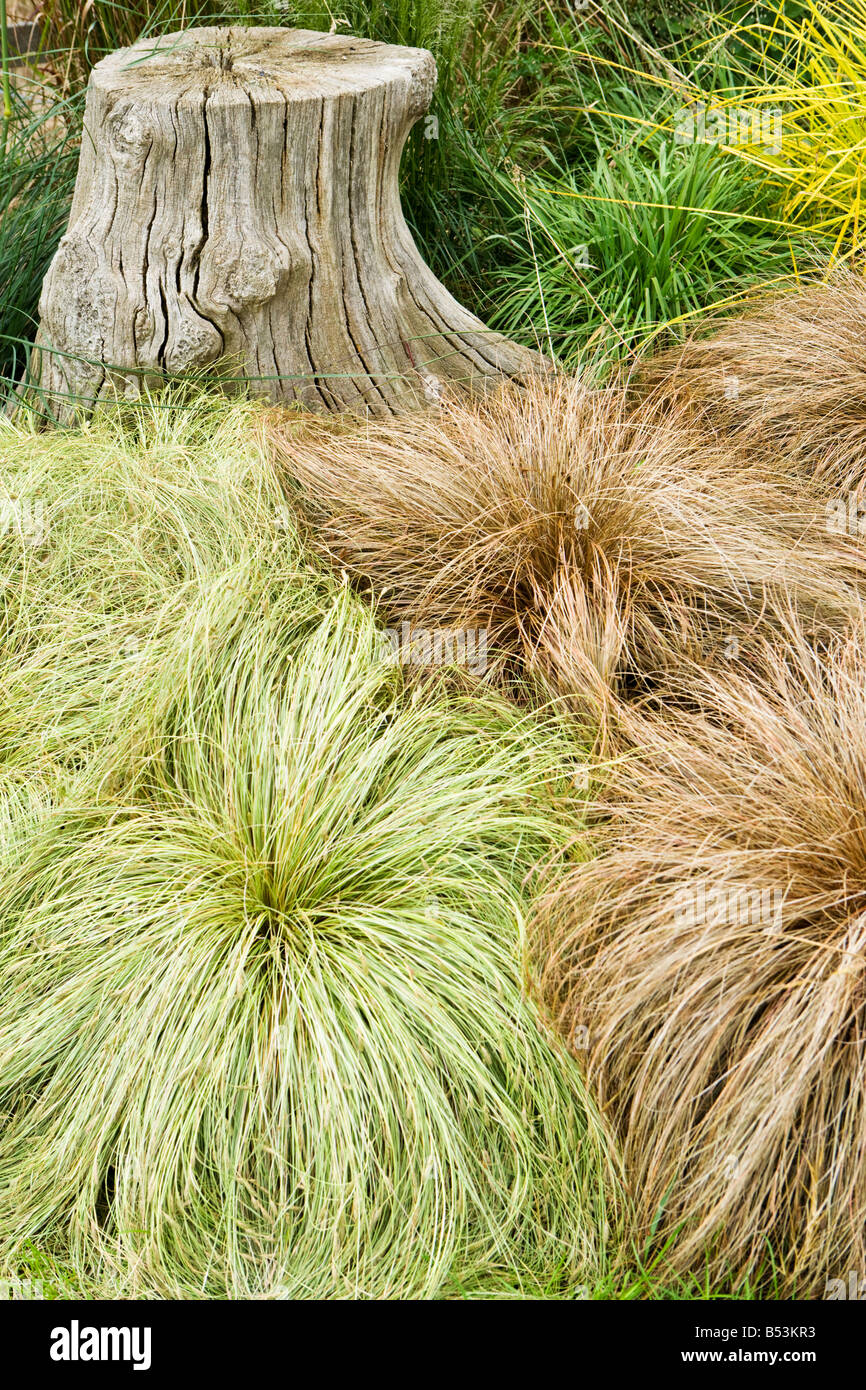 Carex Testacea Stock Photos U0026 Carex Testacea Stock Images   Alamy
