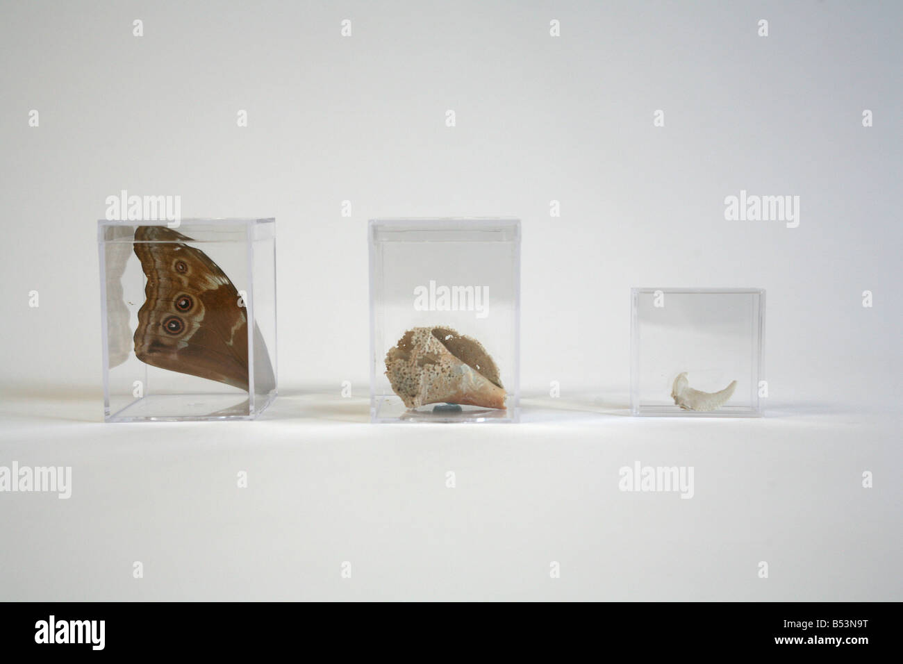 a butterfly wing, a seashell, a fossil tooth Stock Photo: 20366244