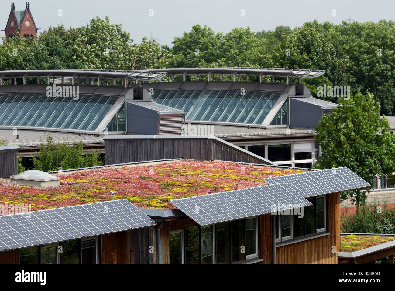 Sedum or 'living roof' on a school classroom in Gelsenkirchen, North Rhine-Westphalia, Germany. Stock Photo