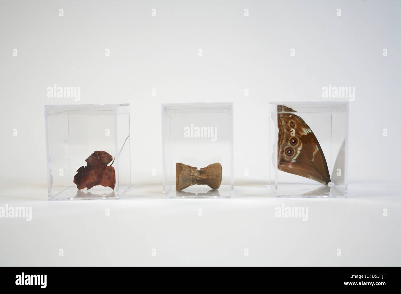 a fall leaf, a fossil bone, a butterfly wing (horizontal) - Stock Image