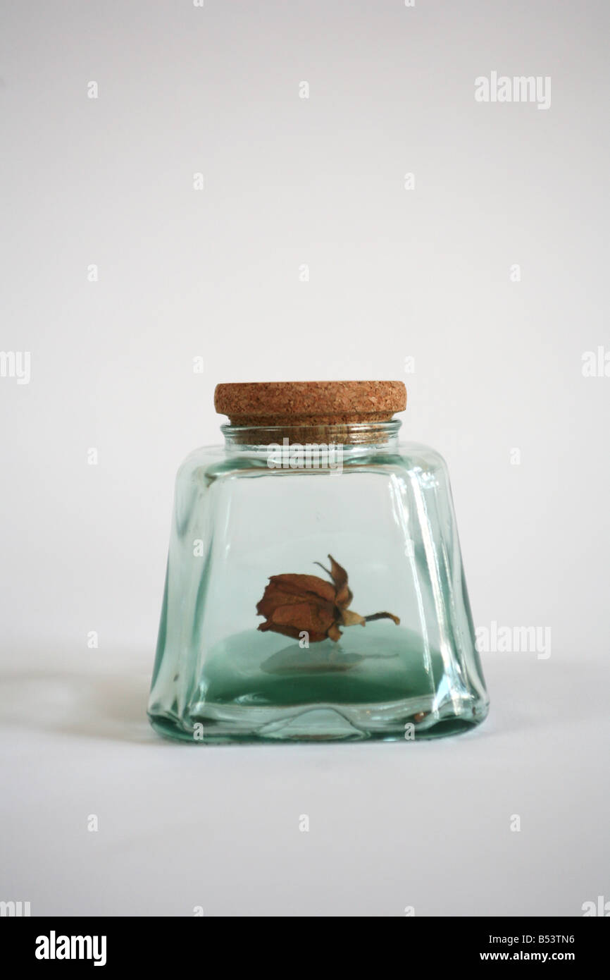 dried rose in a jar - Stock Image