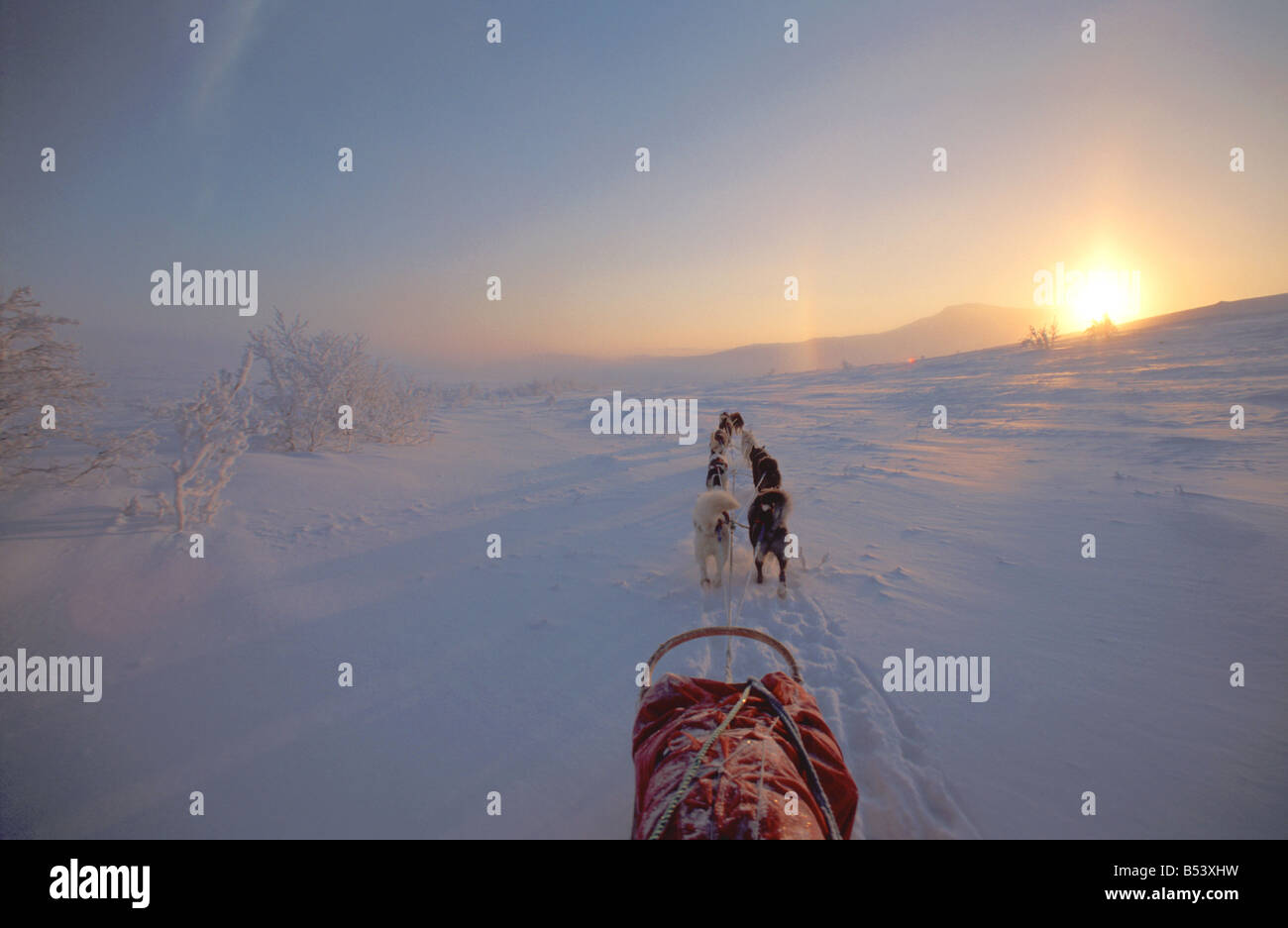 huskies - pulling sledge in polar night - Stock Image