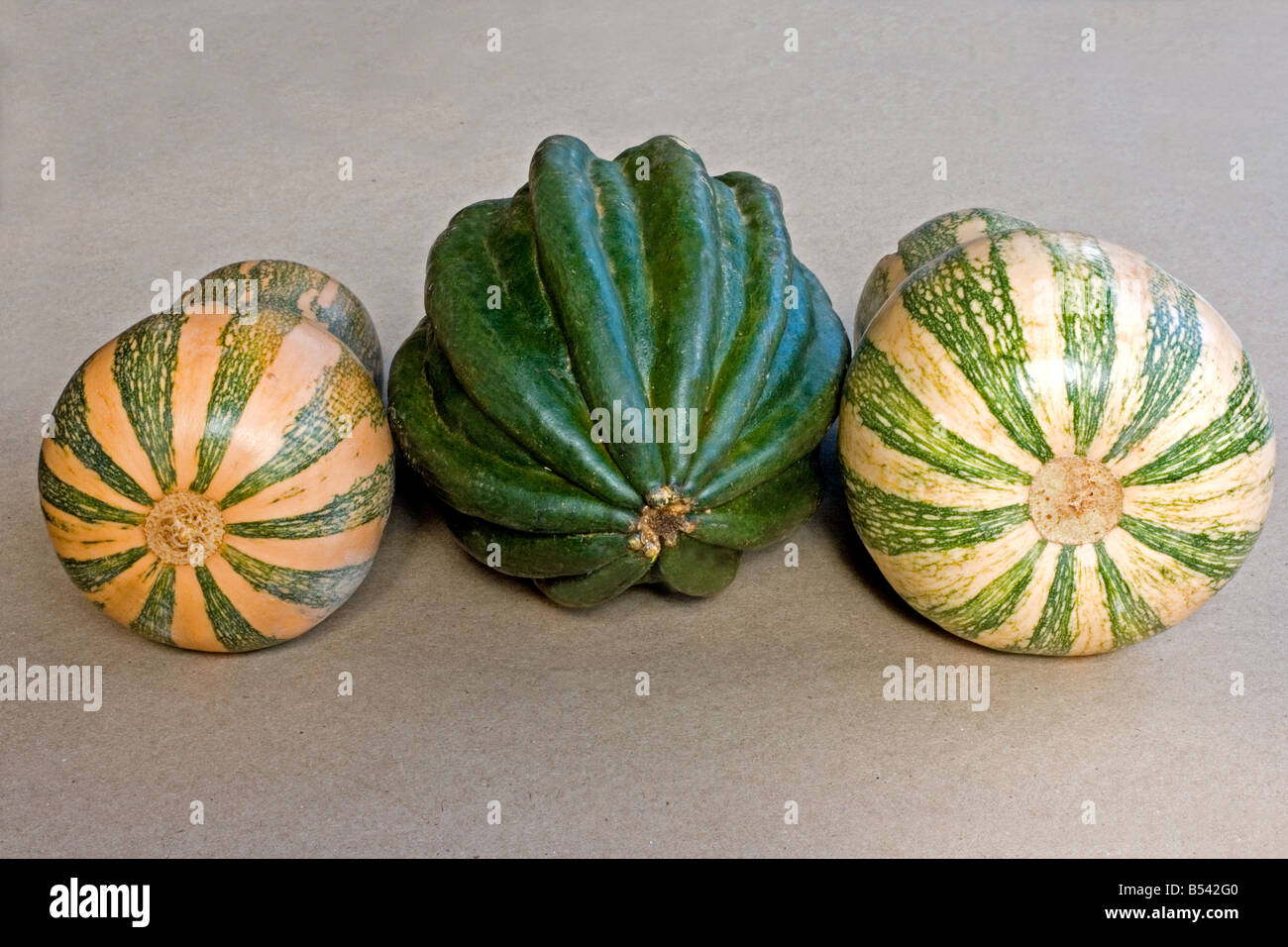 Gourd close-up on neutral background - Stock Image