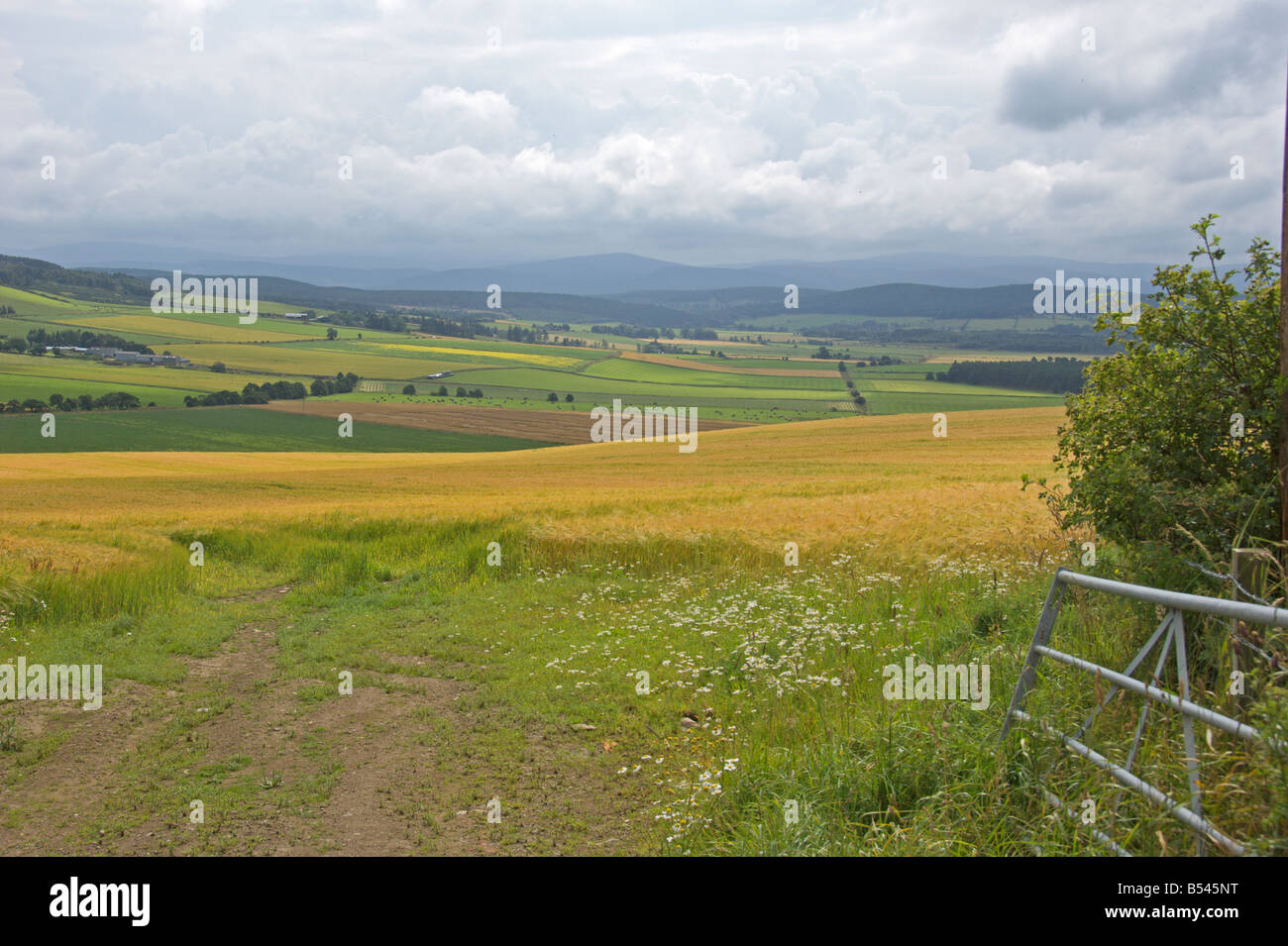 Queen s Victoria View Slack of Tillylodge Deeside Grampians Aberdeenshire Highland Region Scotland August 2008 - Stock Image
