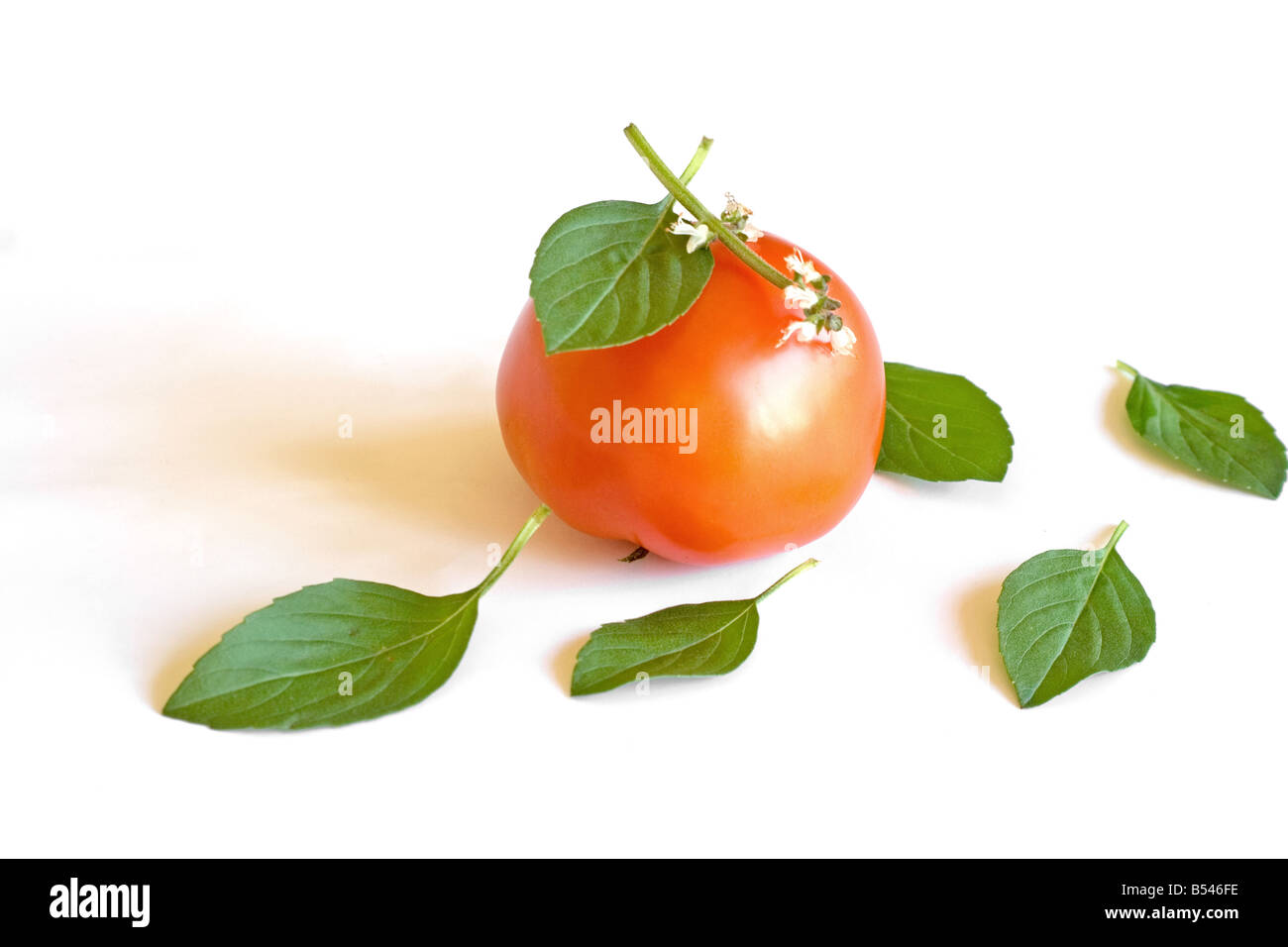 Basil leaves and tomato - Stock Image