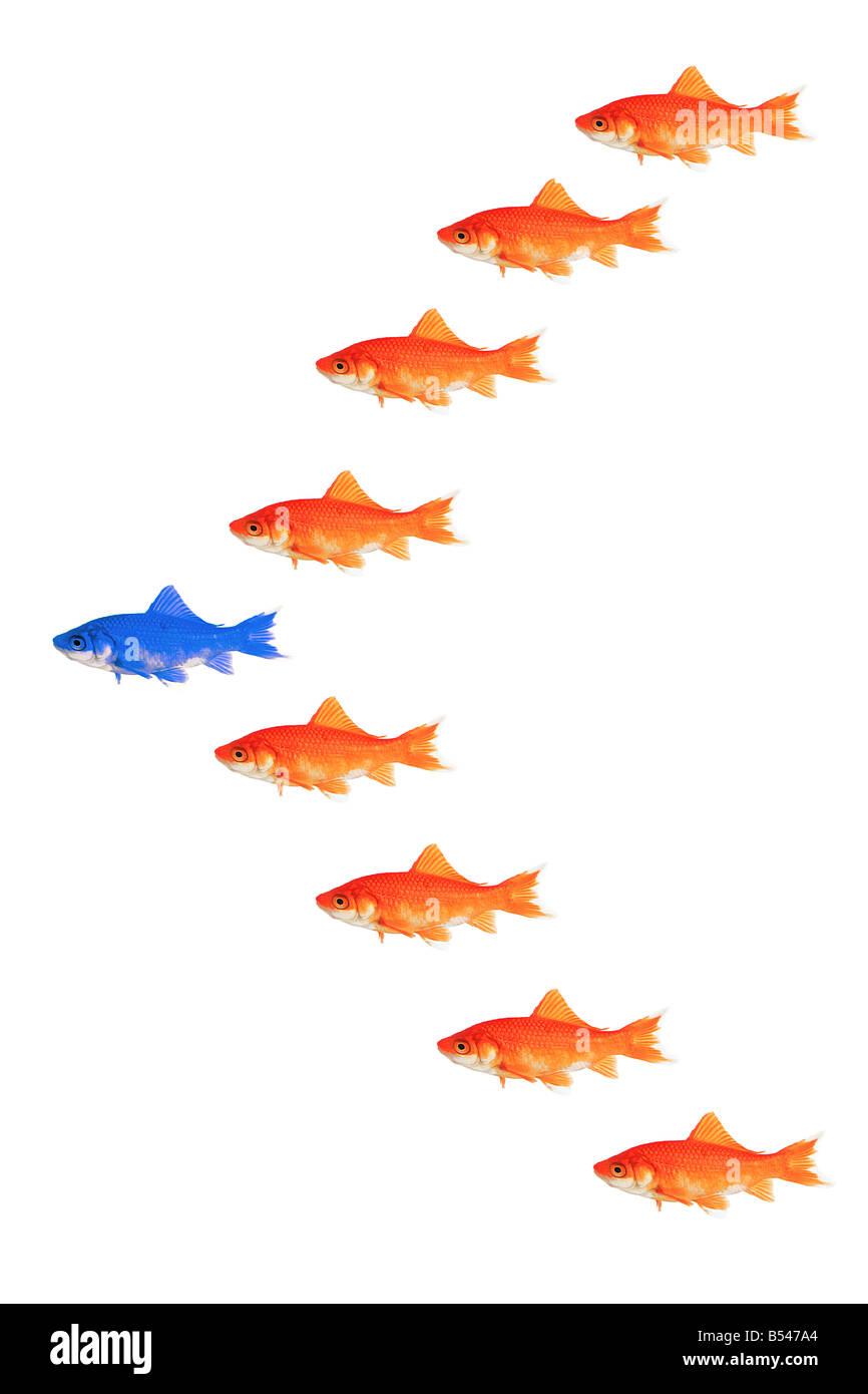 goldfishes - formation - Stock Image