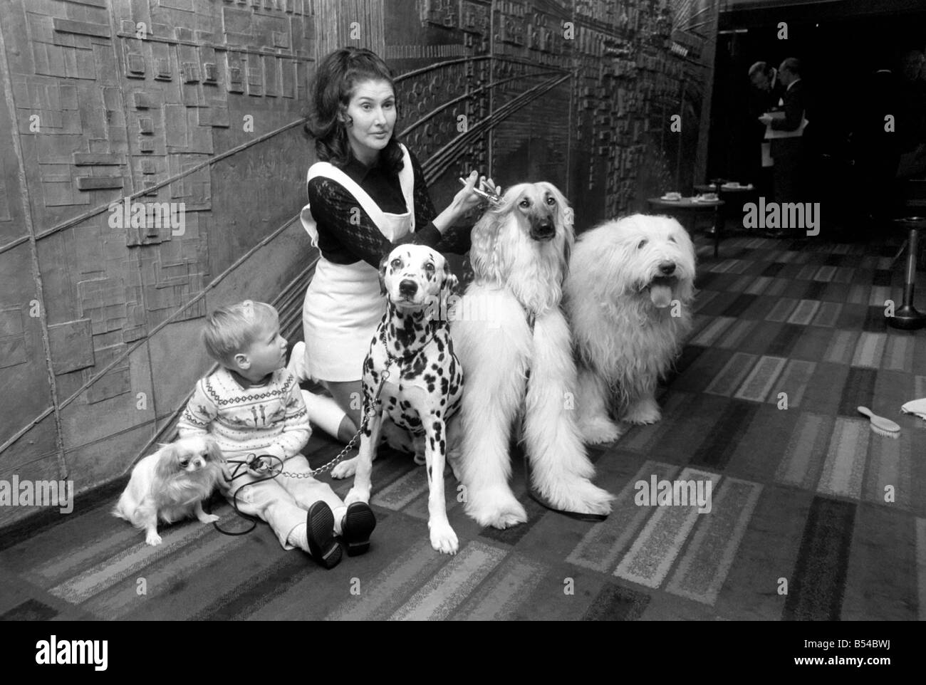 Canine stars of the Film and Television. Also pictured with Hotara 2 1/2 year old Japanese Chinn Spaniel, and 4 - Stock Image