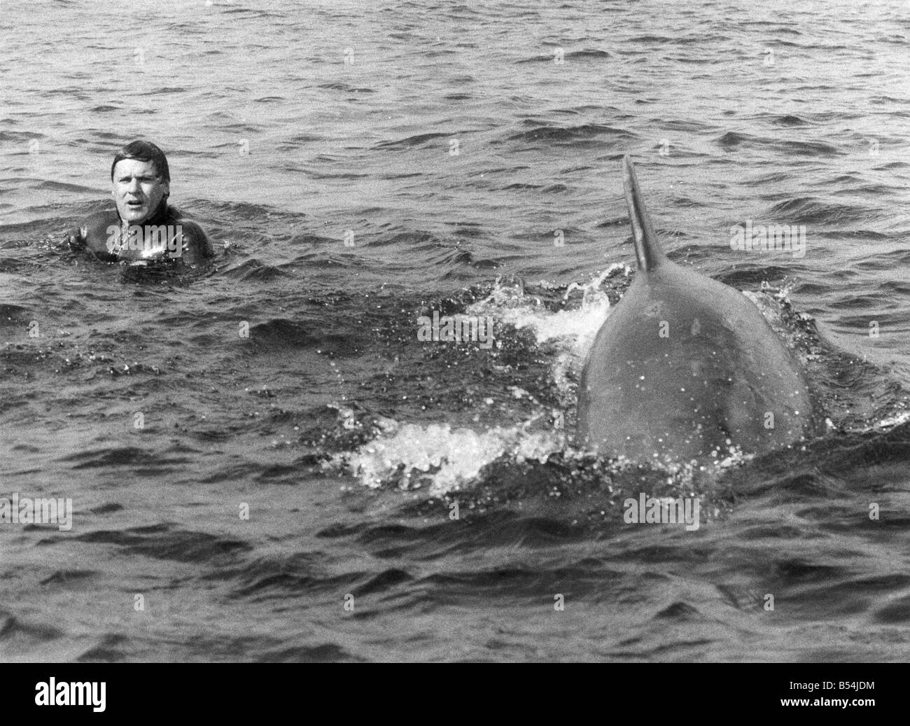 Percy the dolphin pops up to say hello to a lakeman. August 1983 