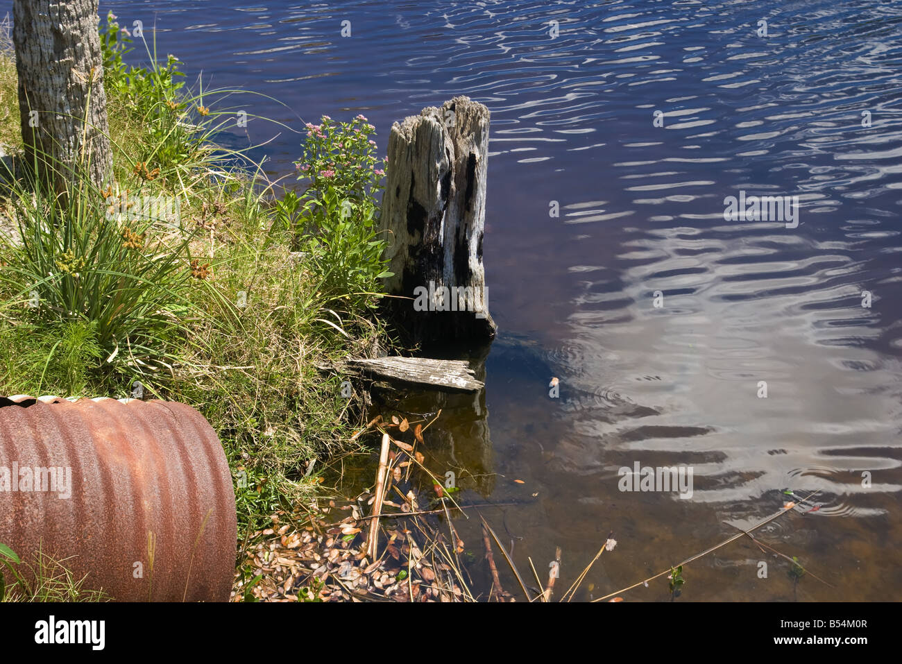 An old stump and a rusty culvert at the edge of a canal, - Stock Image