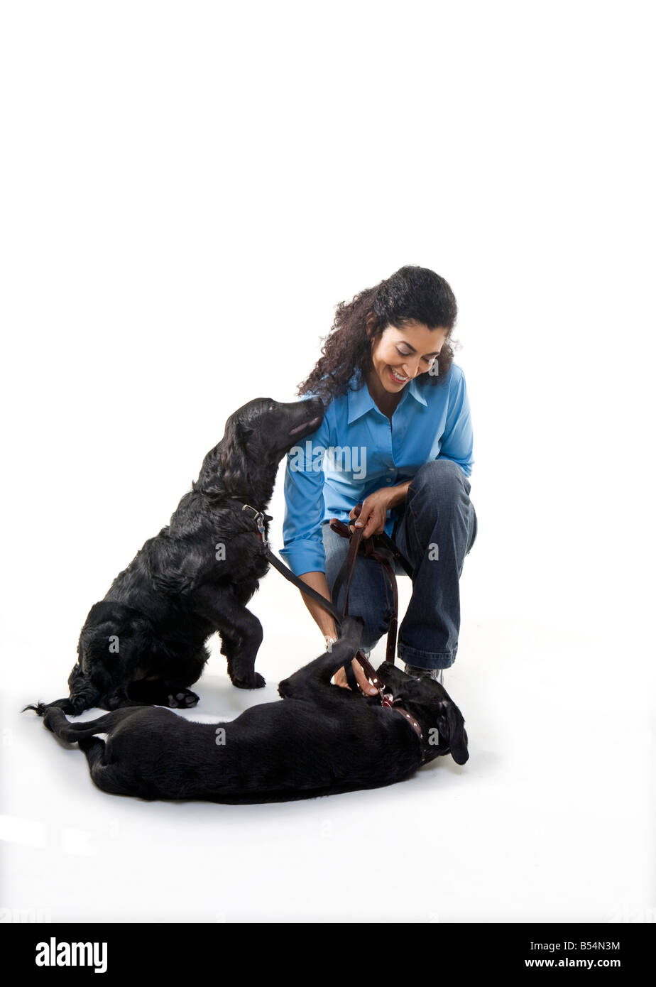 woman plays with two black dogs on white background - Stock Image