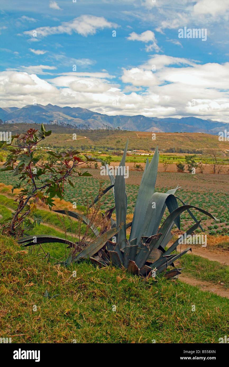 Rural scenery near Ibarra, Ecuador - Stock Image