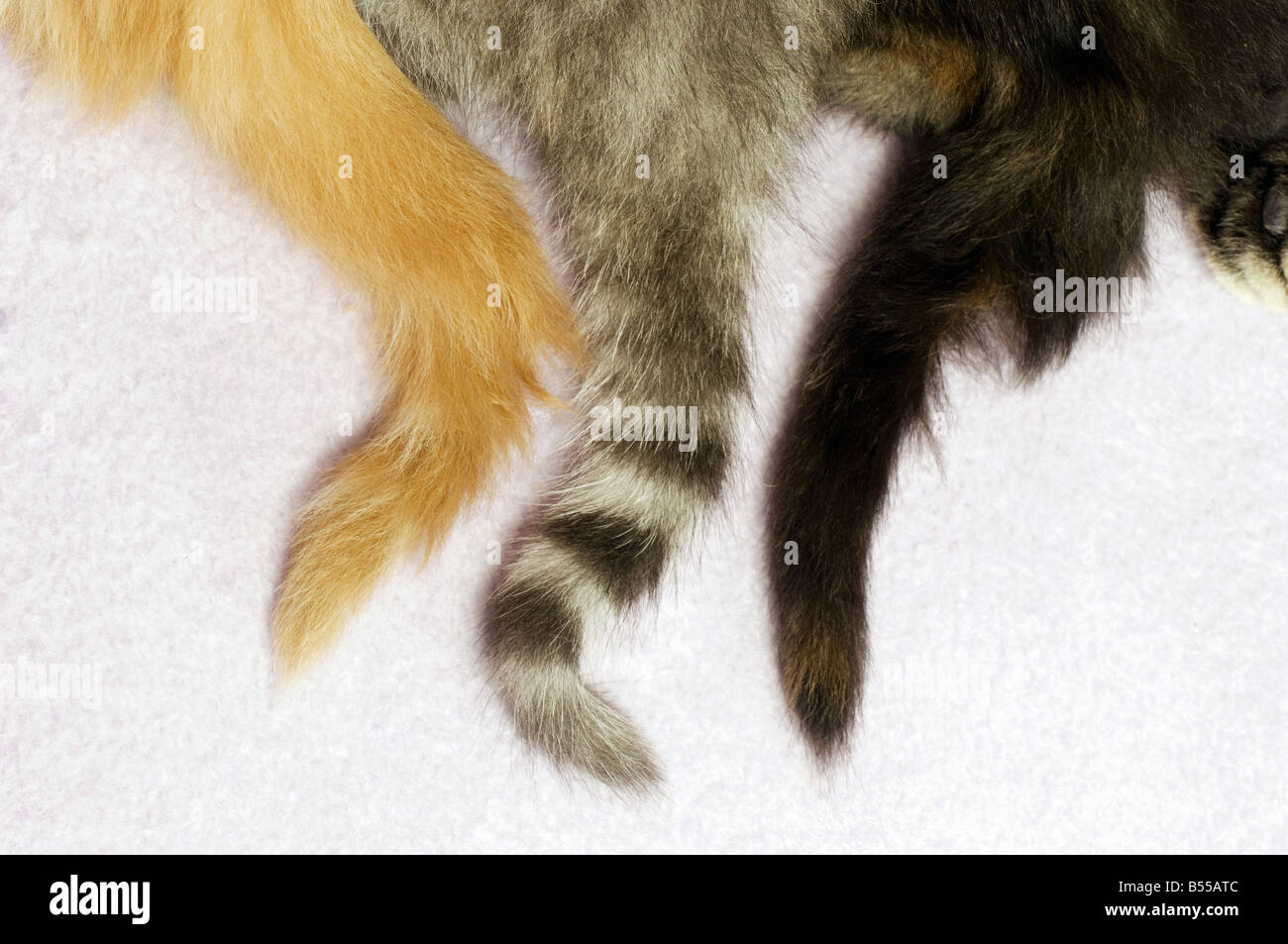 cats - tails - Stock Image
