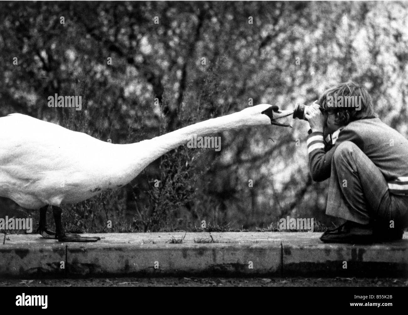Up beck and personal or Watch the birdie.;David Varley seen here taking a picture of a swn who objected to his image - Stock Image