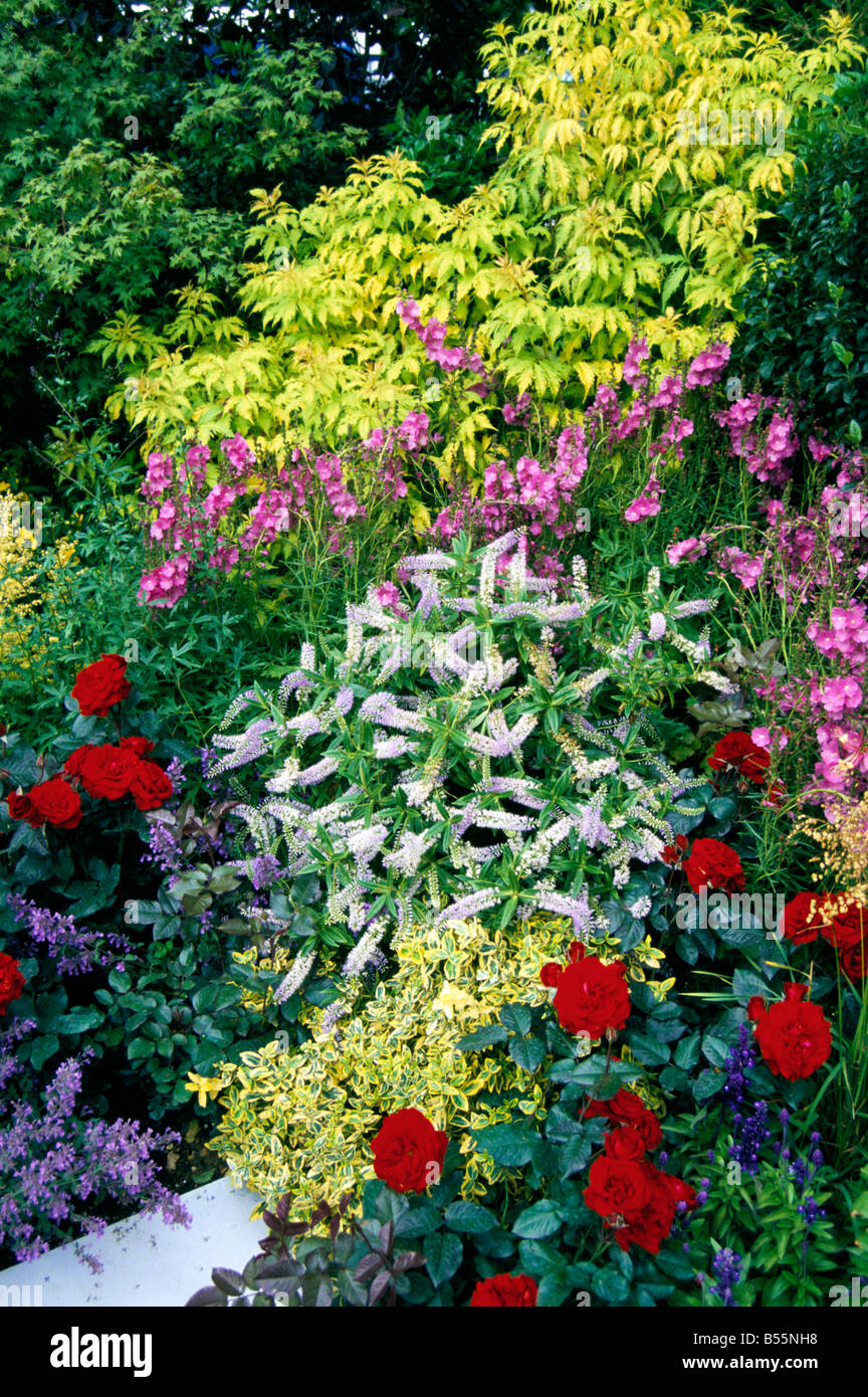 The colourful planting of a Mixed Border - Stock Image