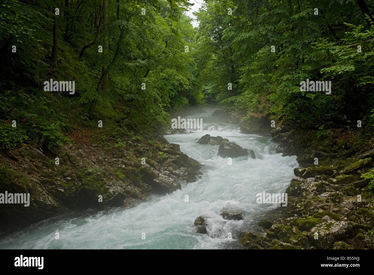 The Radovna river flowing through the Vintgar Gorge near Bled Triglav National Park Slovenia - Stock Image
