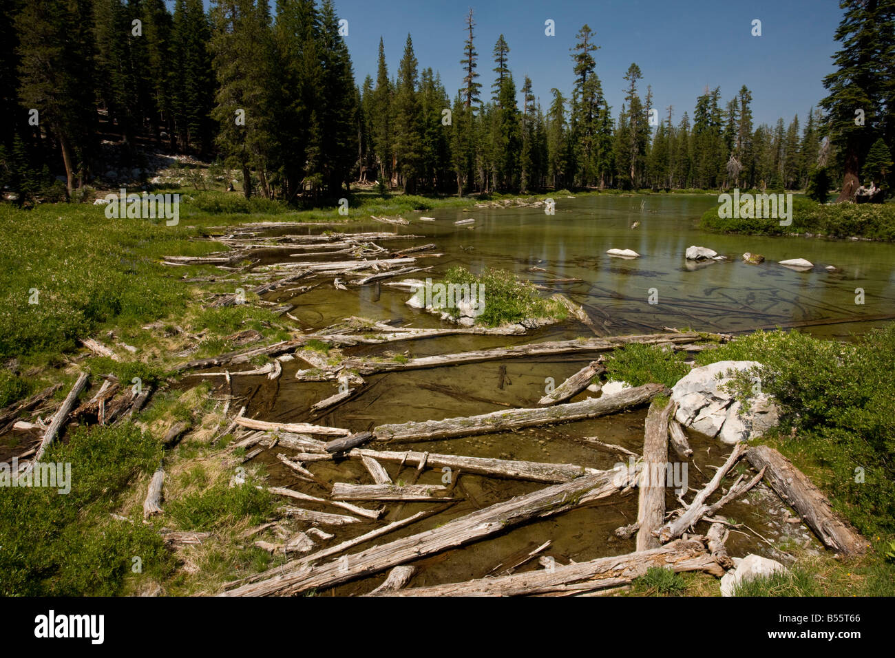 Fallen trees from old avalanche in Cliff Lake Lassen National Park California - Stock Image