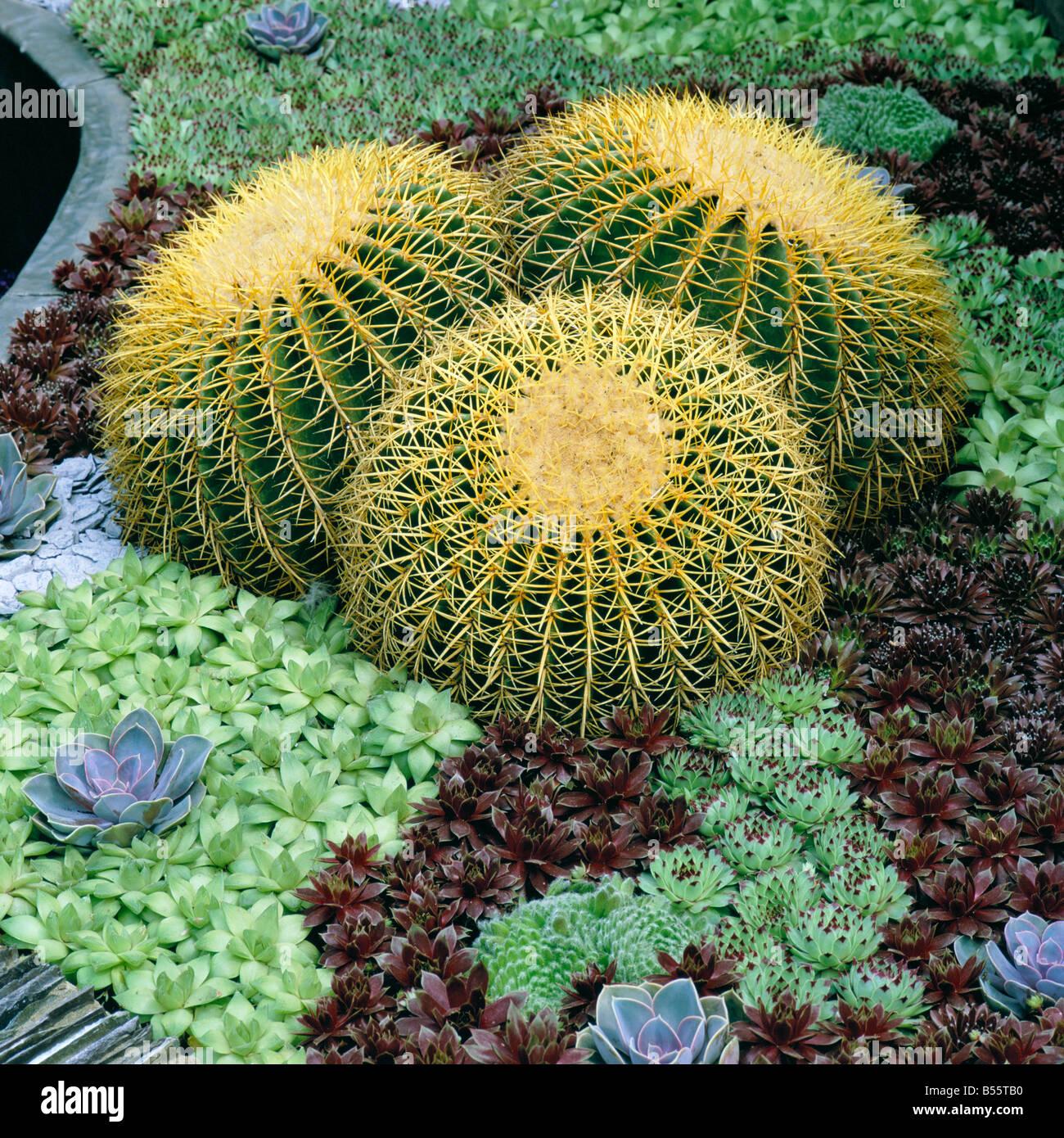Cactus And Succulents In Rock Garden