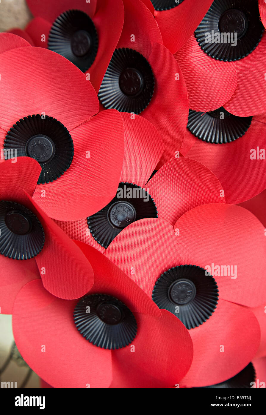 Poppy appeal poppies UK - Stock Image