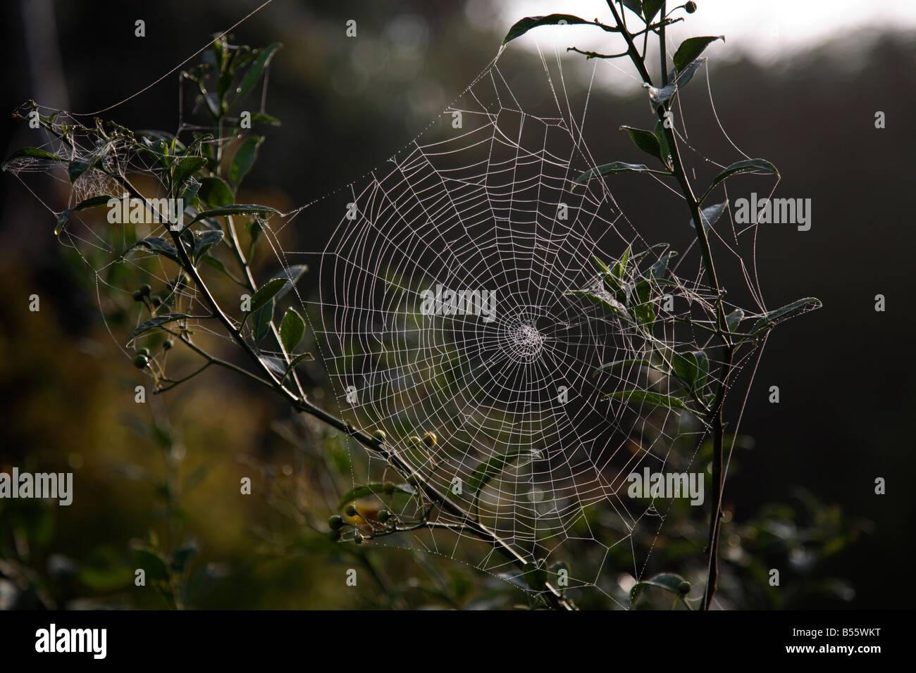 Spiders Webs Misty Autumn - Stock Image