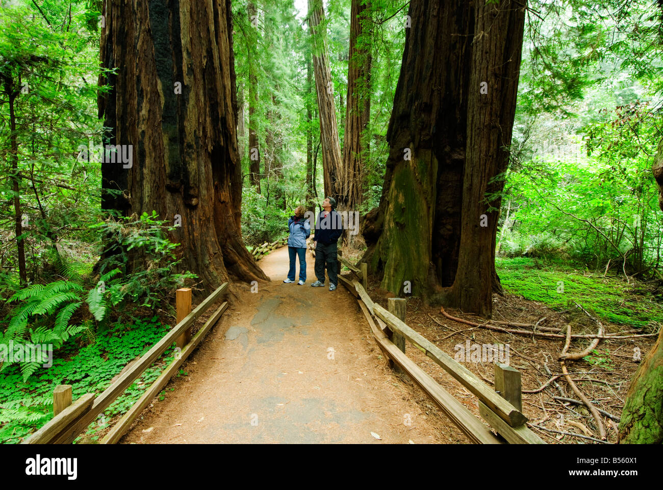 California San Francisco A couple amid the redwoods at Muir Woods Photo 33 casanf81061 Photo Lee Foster 2008 - Stock Image
