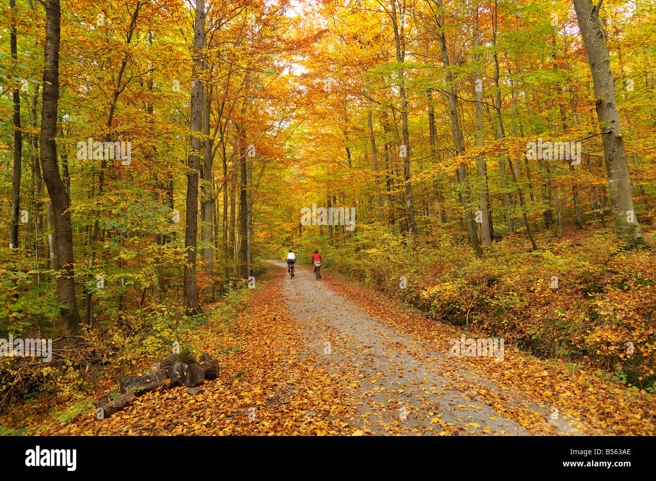 Forest in autumn near Dettenhausen, Naturpark Schönbuch, Baden-Württemberg, Germany - Stock Image