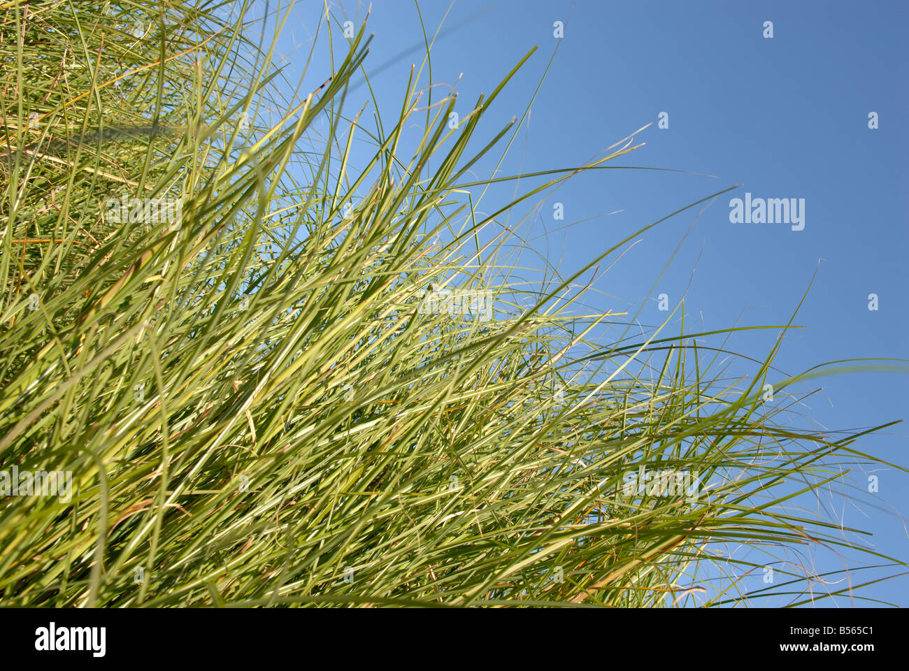 GRASS OUT OF CONTROL - Stock Image