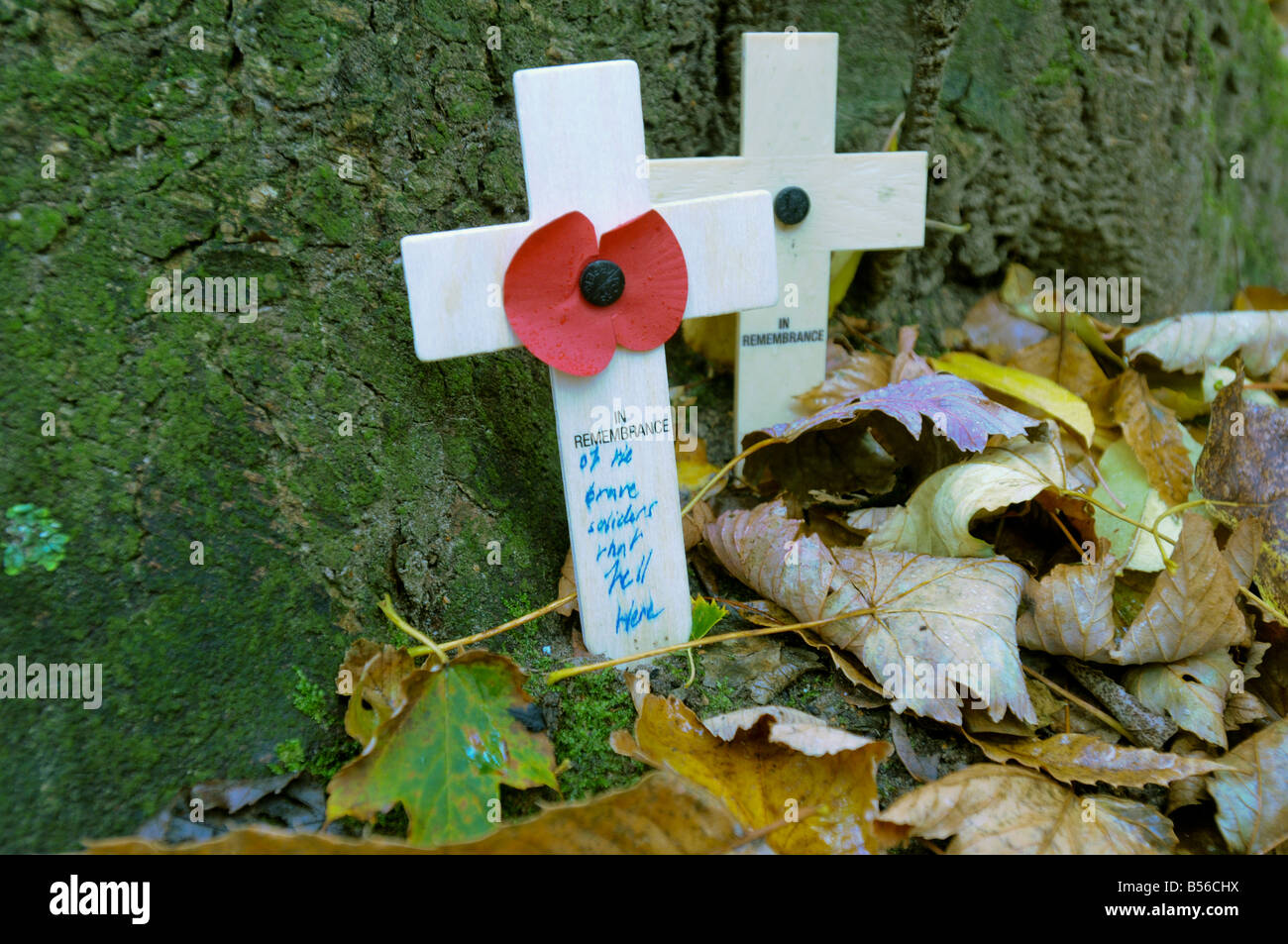 Rememberance crosses leant against a tree at Hill 60, near Ypres, Belgium - Stock Image