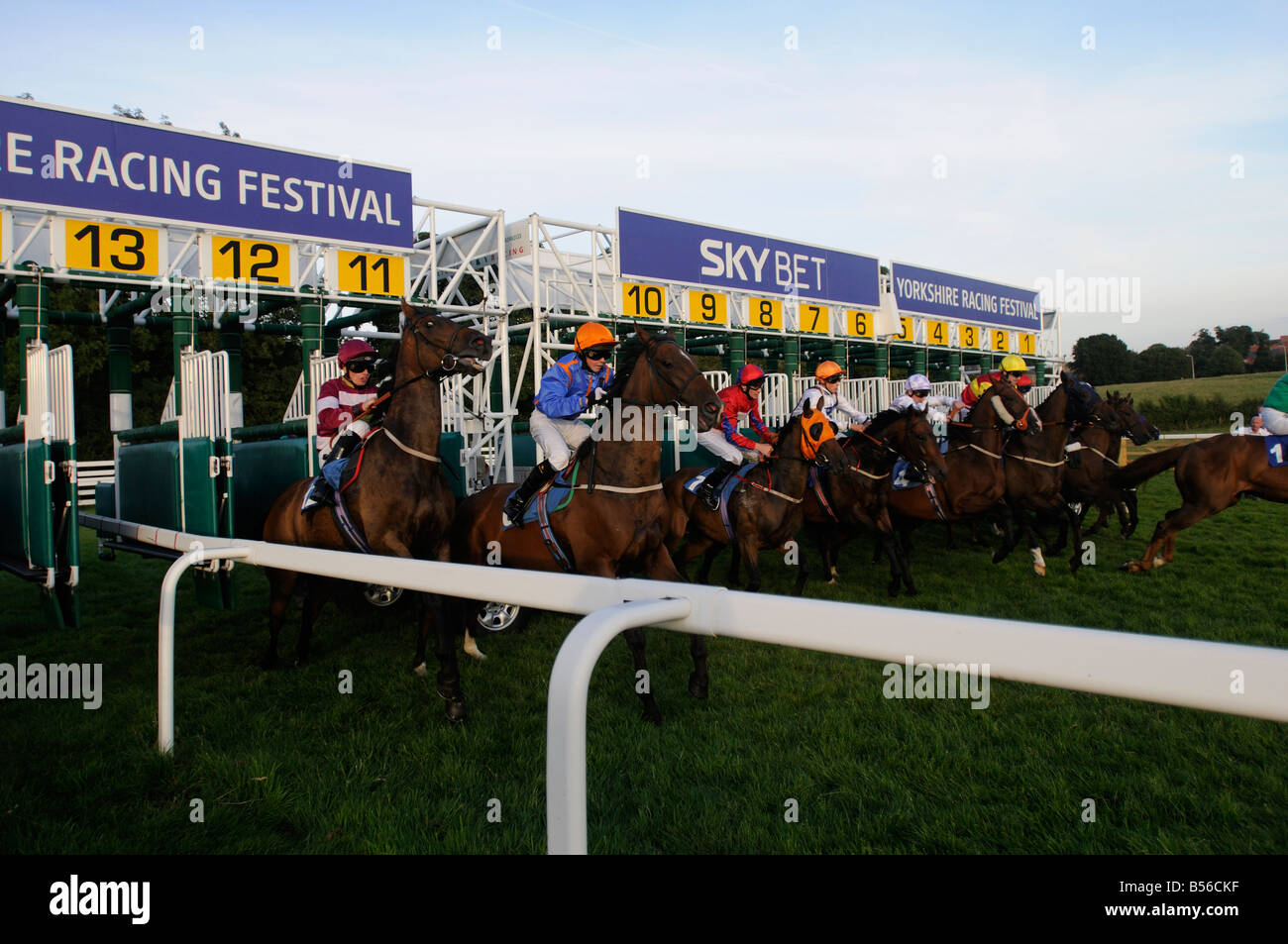 The start of a 5 furlong sprint thoroughbred horse race on the Westwood, Beverley, UK - Stock Image