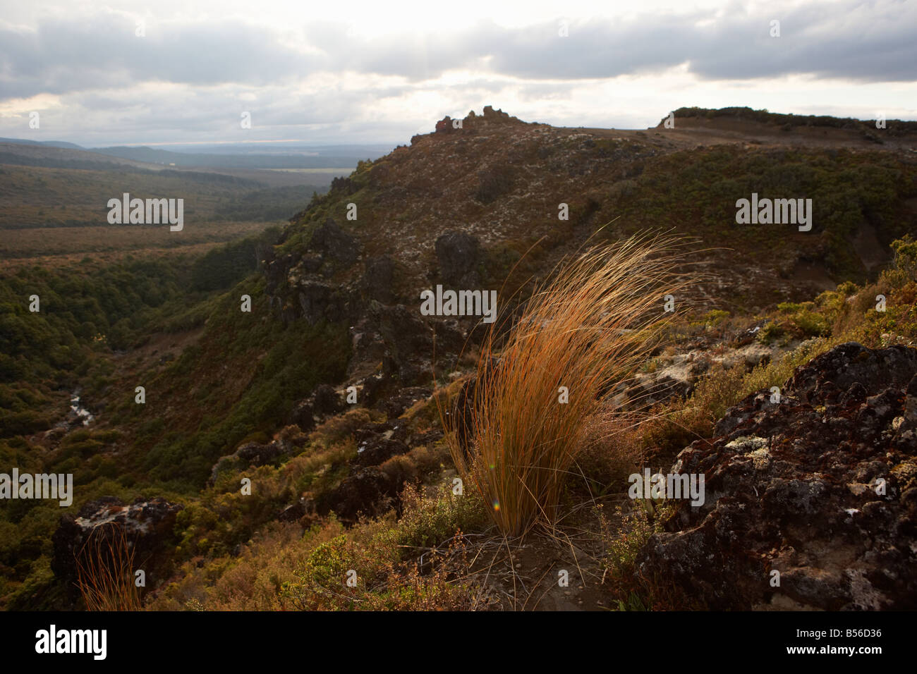 Long grass on rocky path catching the evening sun in front of valley and rocky vista Central Plateau North Island - Stock Image