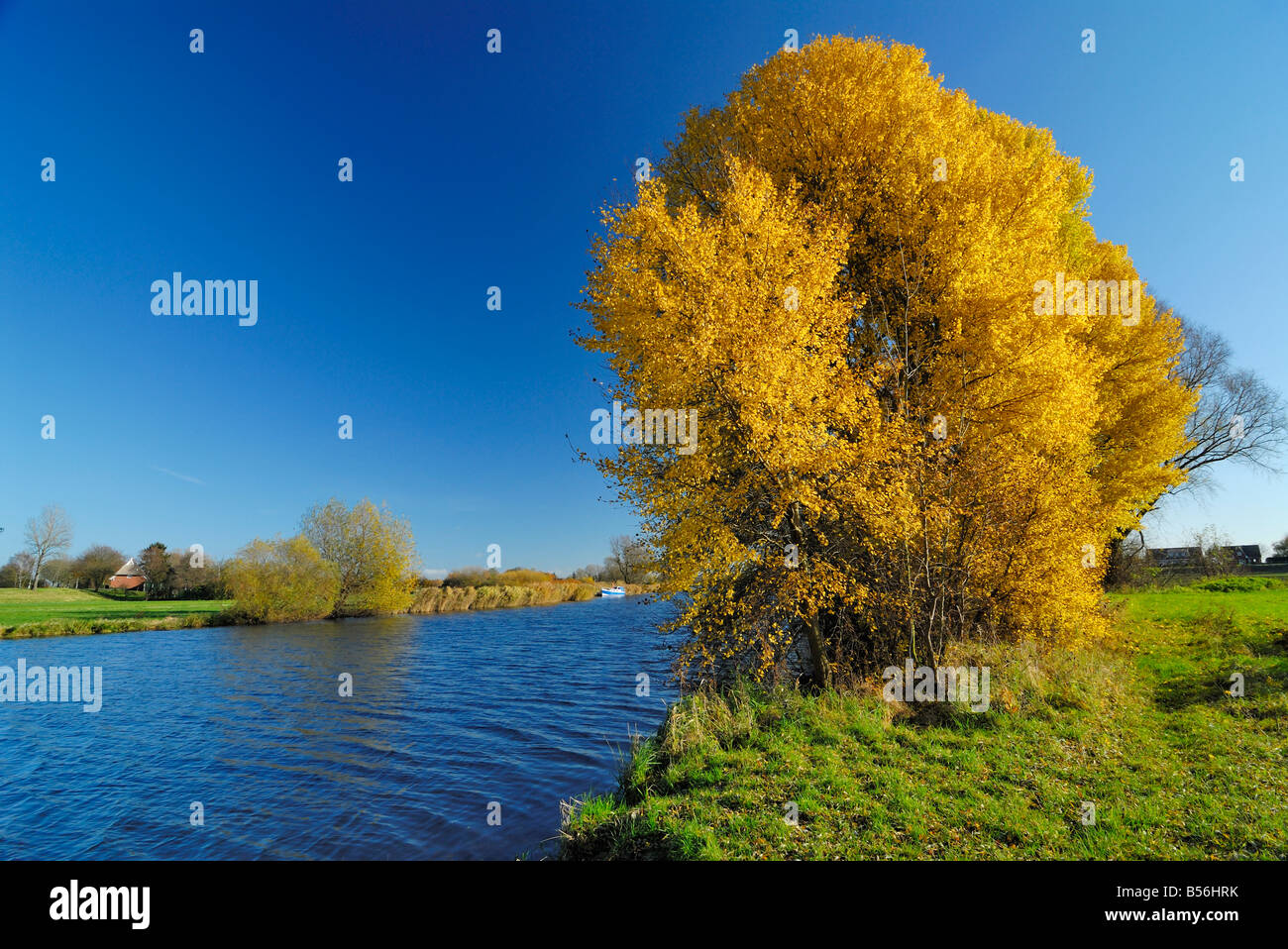 Trees during fall season standing at the Elbe river in the south of Hamburg. Stock Photo