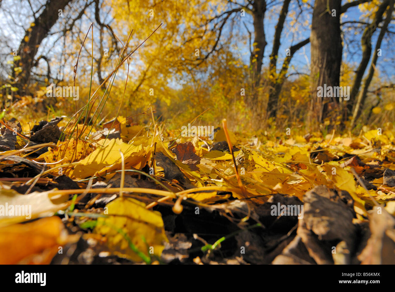 "Foliage at a nature reserve called ""Die Reit"" in the south of Hamburg during fall. Stock Photo"