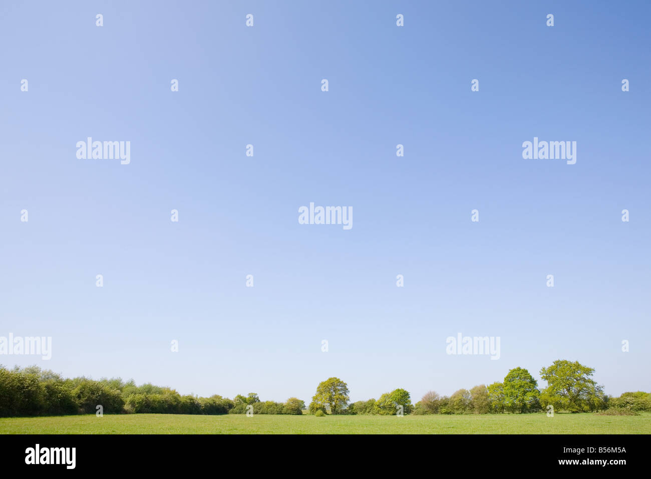Trees in a field - Stock Image