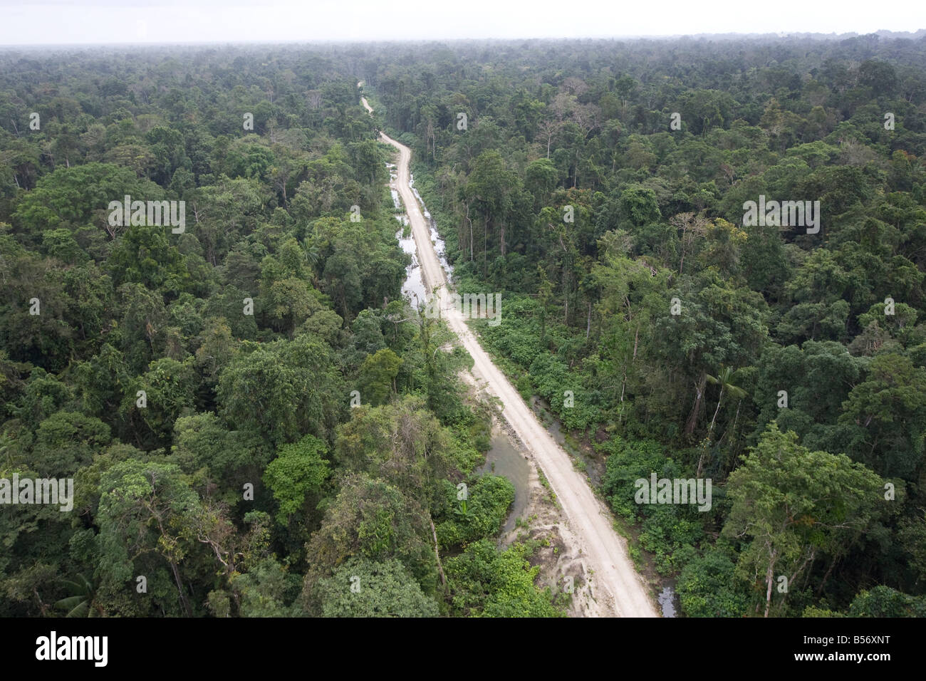 The rainforests of the Turama extension logging concession, near Paia, Gulf Province, Papua New Guinea - Stock Image