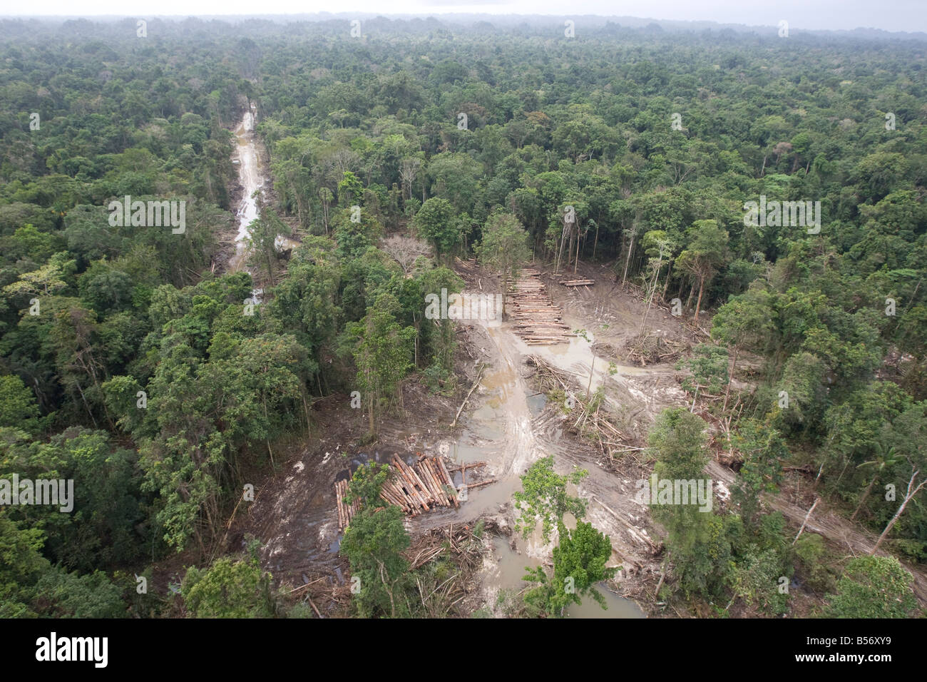 Area known as 16km in the rainforests of the Turama extension logging concession,Gulf Province, Papua New Guinea. - Stock Image