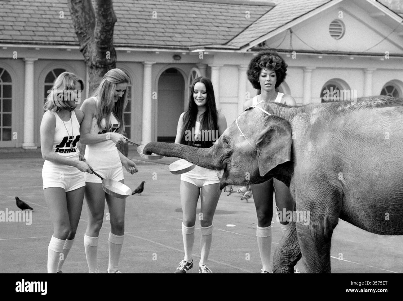 Strange Tales Of London Beauty Queens Who Will Be In The Pancake Race On Tuesday And Baby Elephant Minoti She Is Five But
