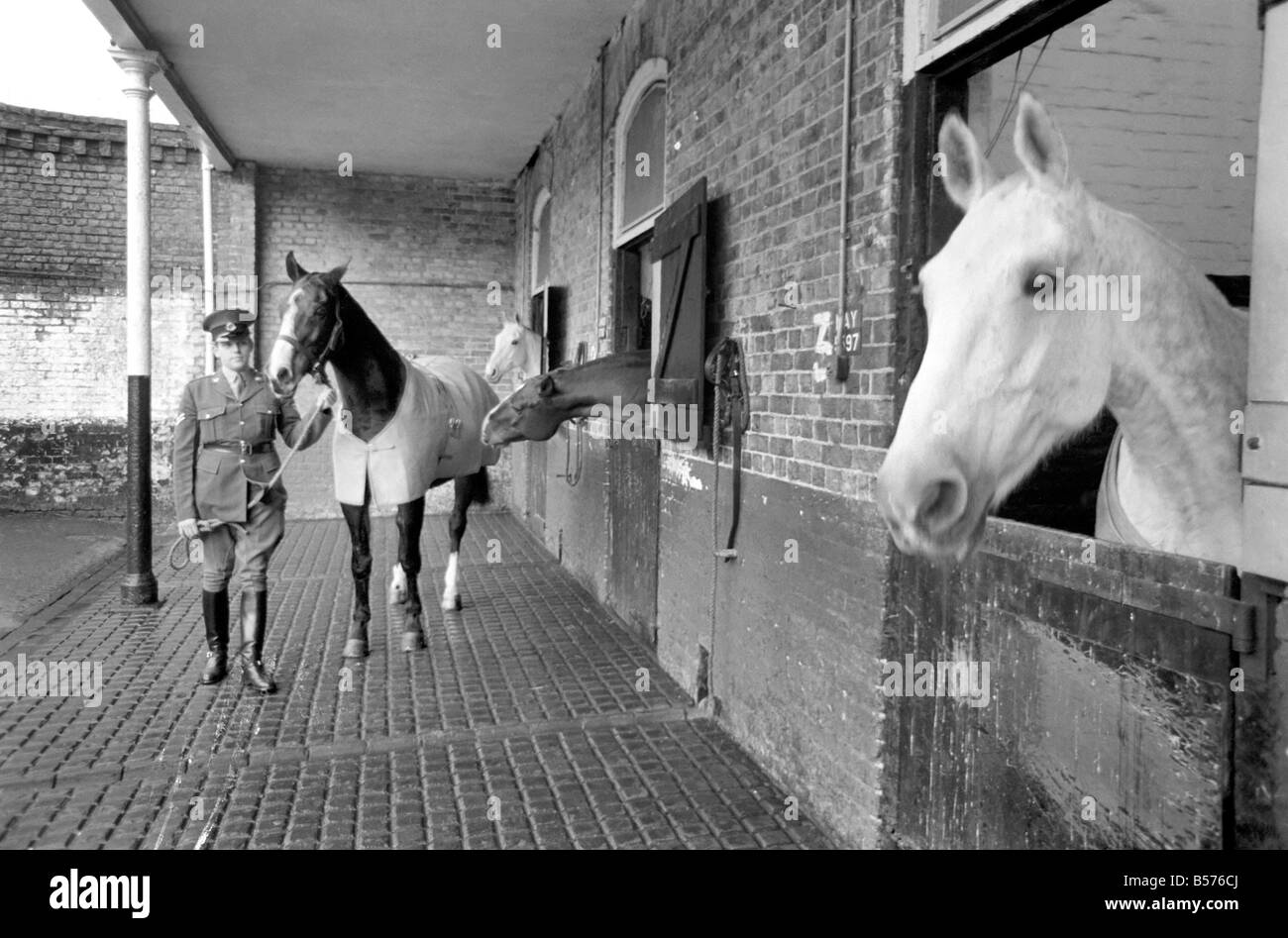 Dennis is the first Army horse to go into retirement under the recent agreement between the RSPCA and the Ministry - Stock Image