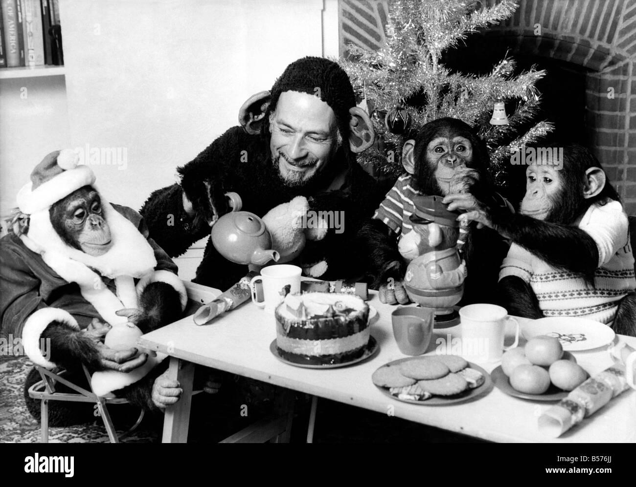 Chimpanzee Christmas party December 1978 P004075 - Stock Image